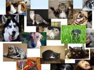 На Украине создали социальную сеть для животных