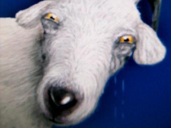 LiveJournal потерял четверть аудитории