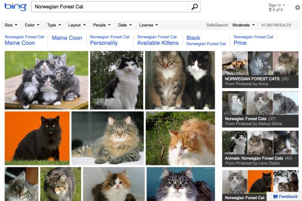 Microsoft добавил в выдачу Bing коллекции картинок Pinterest