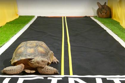 Черепаха обогнала зайца в прямом эфире Facebook