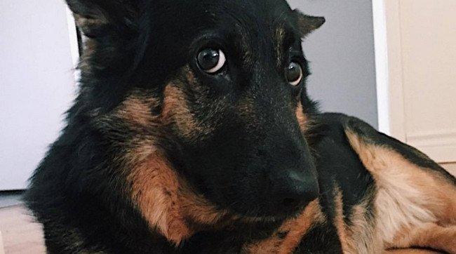 Госдума обяжет Роскомнадзор заблокировать группы в соцсетях с контентом об убийстве животных