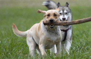 Советы по выбору собаки