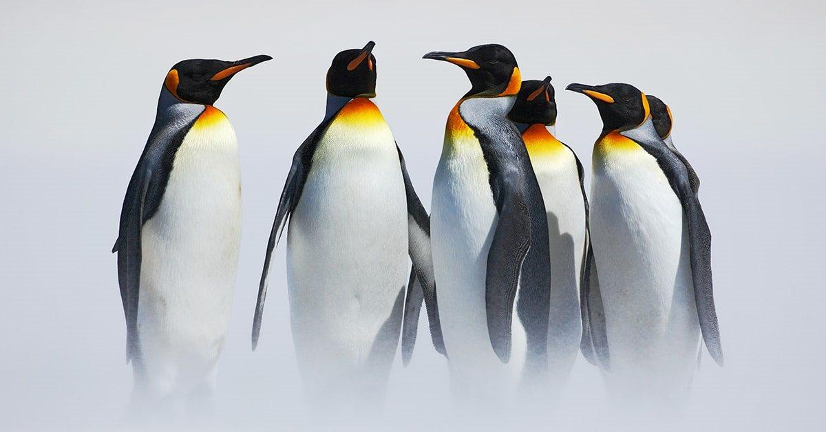 Google Penguin исполнилось 9 лет